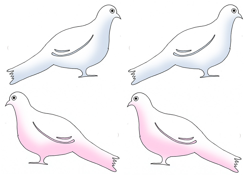 Doves and pigeons as family members to sit in family tree for kids.
